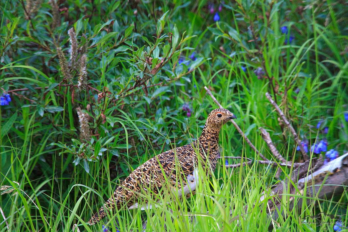 bird-in-the-grass