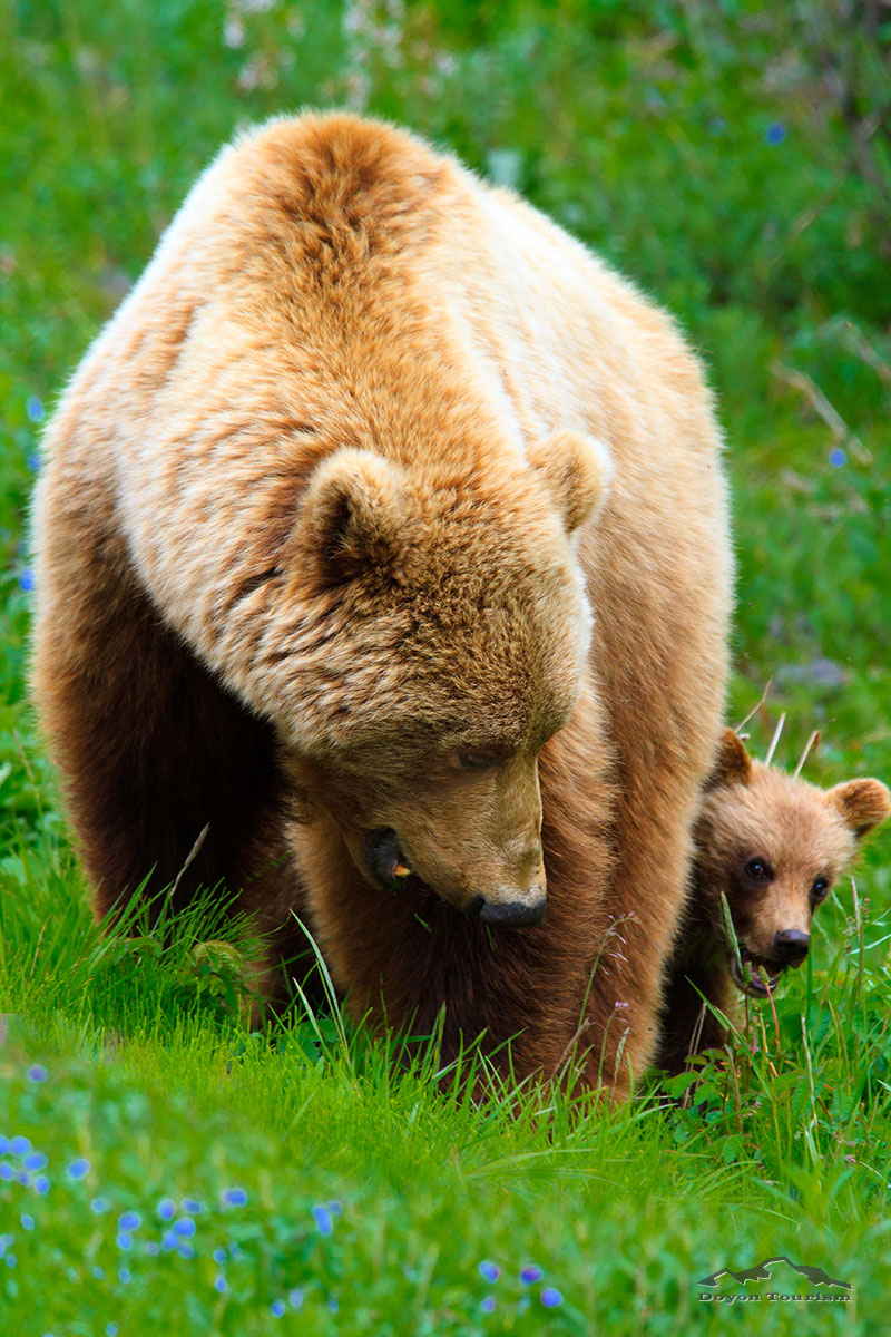 mom-grizzly-and-cub