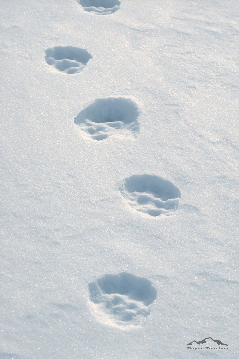 tracks-in-the-snow