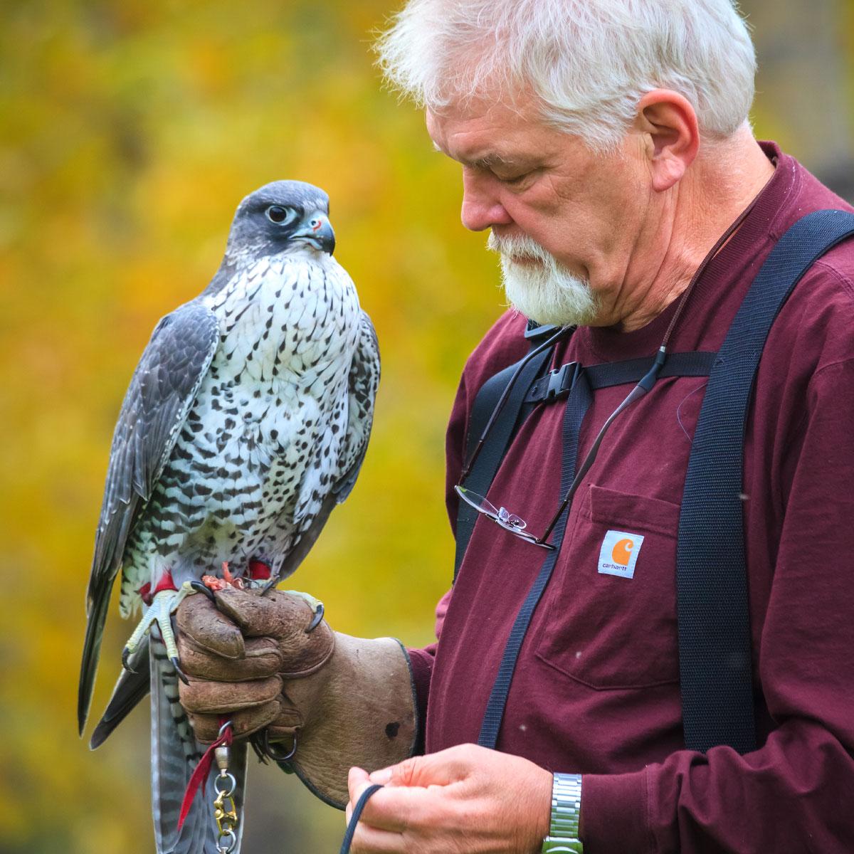 Bird of Prey Presentation